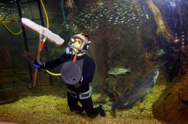 aquarium-diver