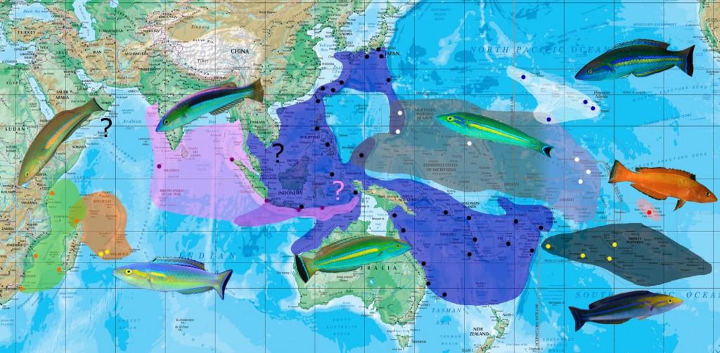 cerasinus map
