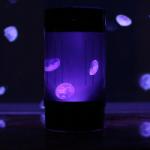 Global Pet Expo: Jellyfish Art