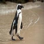 Mystic Aquarium Successfully Treats Endangered Penguin With Cancer
