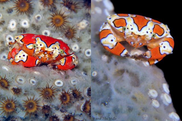 More sponge-associated specimens. Credit: Ellen Muller