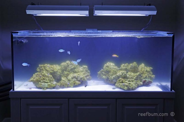 Cloudy water pic - reefs