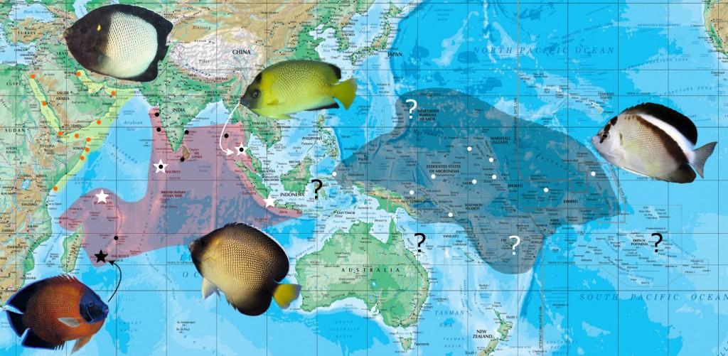 apolemichthys map