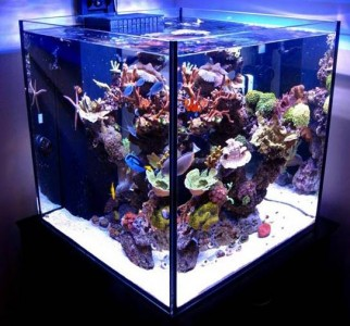 aquatic creations tank - reefs