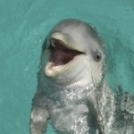 Baby Bottlenose Dolphin