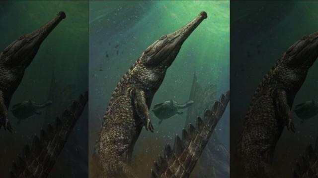 marine crocodile - reefs