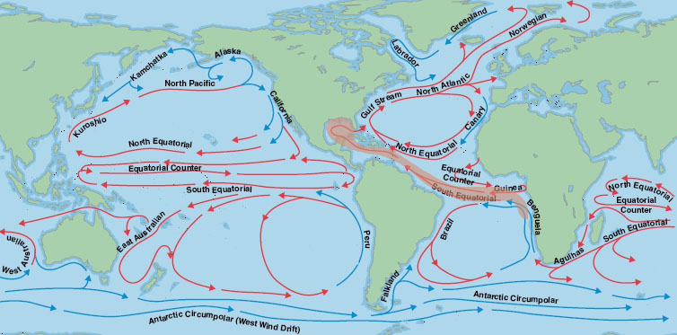 Oceonographic currents showing movement from the Eastern Atlantic to the Western Atlantic via the south equatorial current.