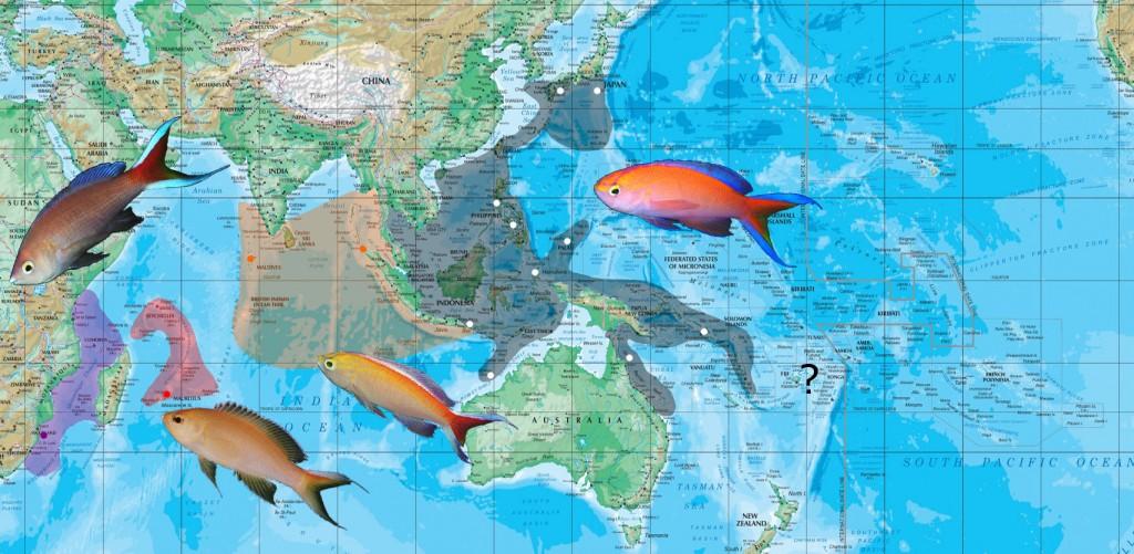 parvirostris map
