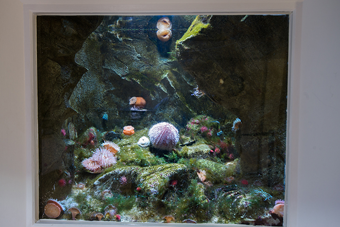 ...And a recreation. This would work better if the anemones would stay still. Photo by Richard Aspinall.