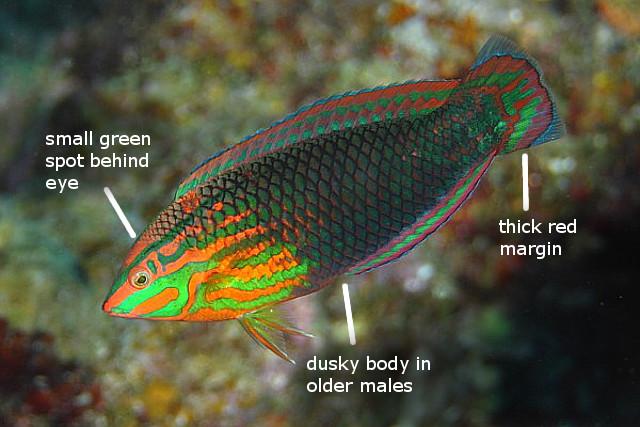biocellatus takeru tsuhako2