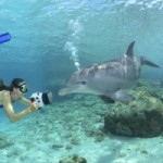Snorkeling with Dolphins and New Ikelite Toys