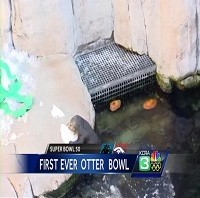 img-Inaugural-Otter-Bowl-takes-place-at-Monterey-Bay-Aquarium