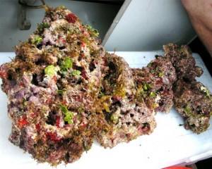 reefs.comLRvsDRoceanlifedirect