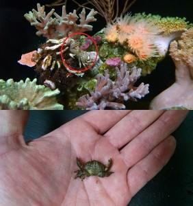 reefs.comLRvsDRpest