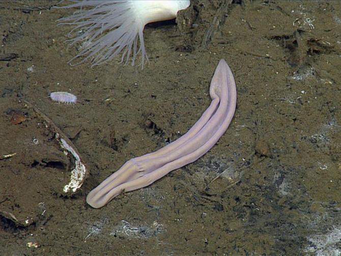 sockworm