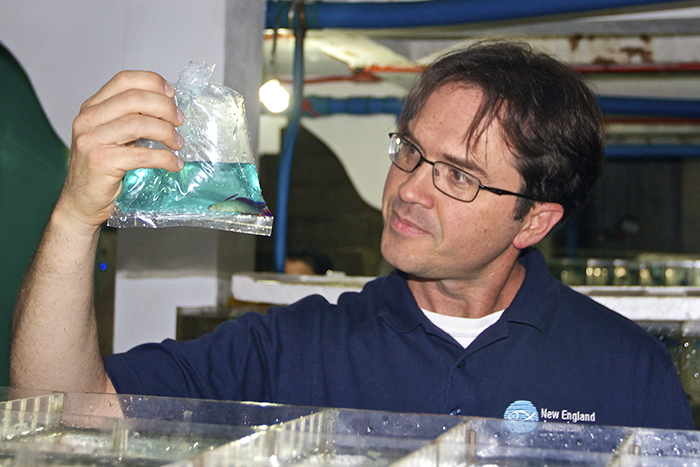 Dr. Andrew Rhyne and his colleagues from New England Aquarium are taking a closer look at the trade in marine aquarium fishes, and the data they are producing could be a game-changer.