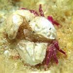 A Marine Ménage à Trois – the Goby, Shrimp & Crab Love Affair