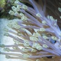 xenia marcin - reefs