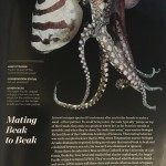 National Geographic Magazine – What's Odd About That Octopus? It's Mating Beak to Beak.