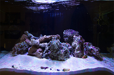 There Are A Number Of Choices When It Comes To The Rock You Use For  Aquascaping, My Personal Favorite Is Live RockTodayu0027s Marine Aquarists Have  More Options ...