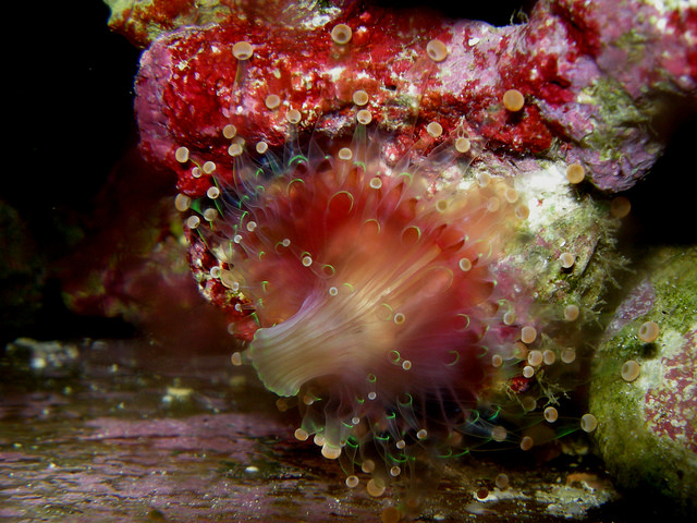 aquarium 37 knucklehead