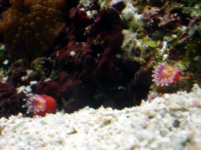 aquarium grins2