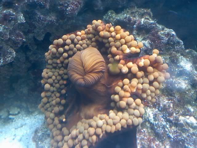 aquarium mobert