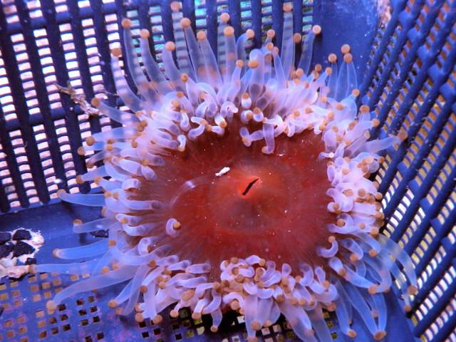 aquarium nick rosenthal