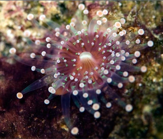 aquarium sabine penisson