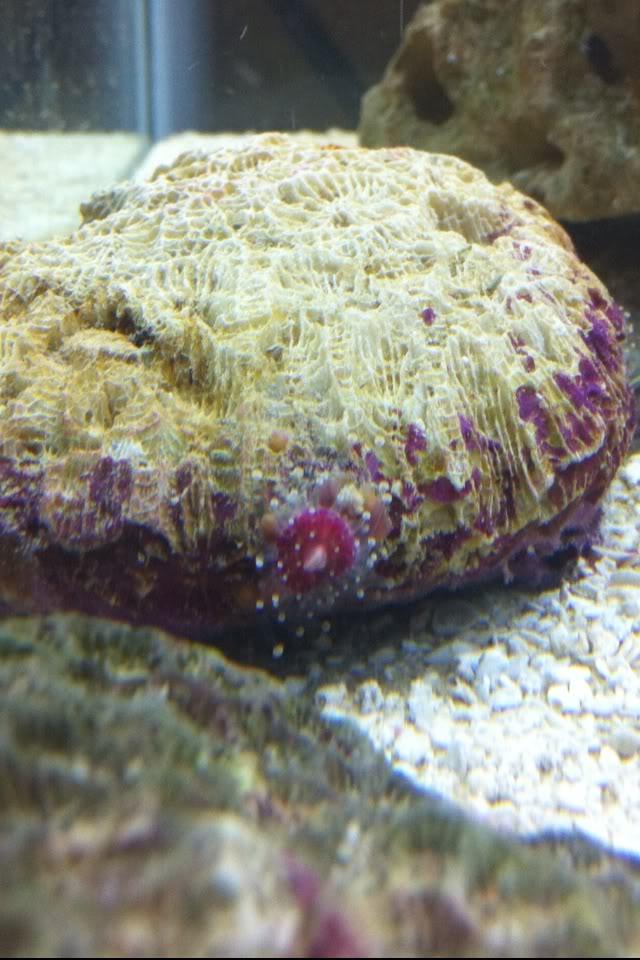aquarium smogl00