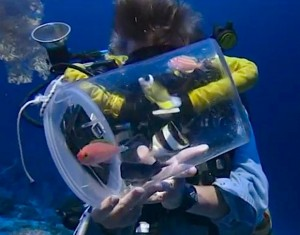 palau-deep-reef-fish