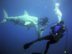 6_shark_diver