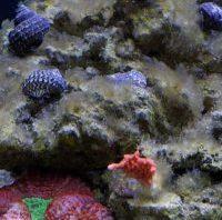 Diatoms - reefs