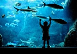 Waikiki Aquarium-2
