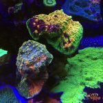 Reefs.com Exclusive: Behind-the-scenes tour of WWC's Coral Farm