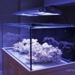 Review: Coast To Coast Custom Aquariums Frag Tank