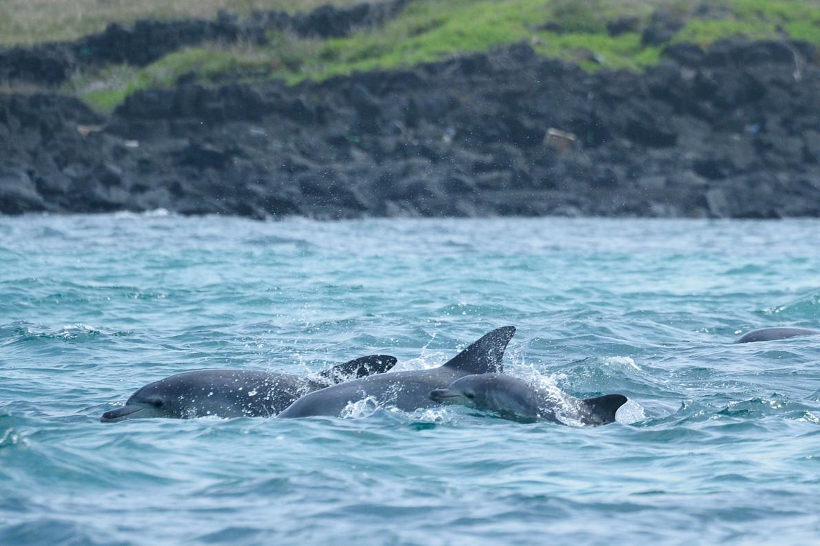 dolphin-captive-wild-calf.adapt.1190.1