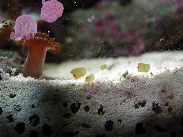flatworms 3 - reefs