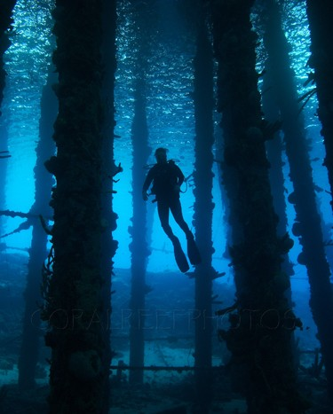 Silhouette of scuba diver under pier. Homo sapiens. Caracas Baai, Curacao, Netherlands Antilles. Unaltered/Uncontrolled N/A