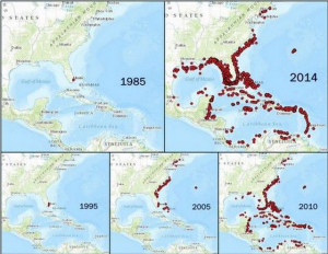 Lionfish sightings, 1985-2014. Source: US Geological Survey/Florida Fish and Wildlife Conservation Commission