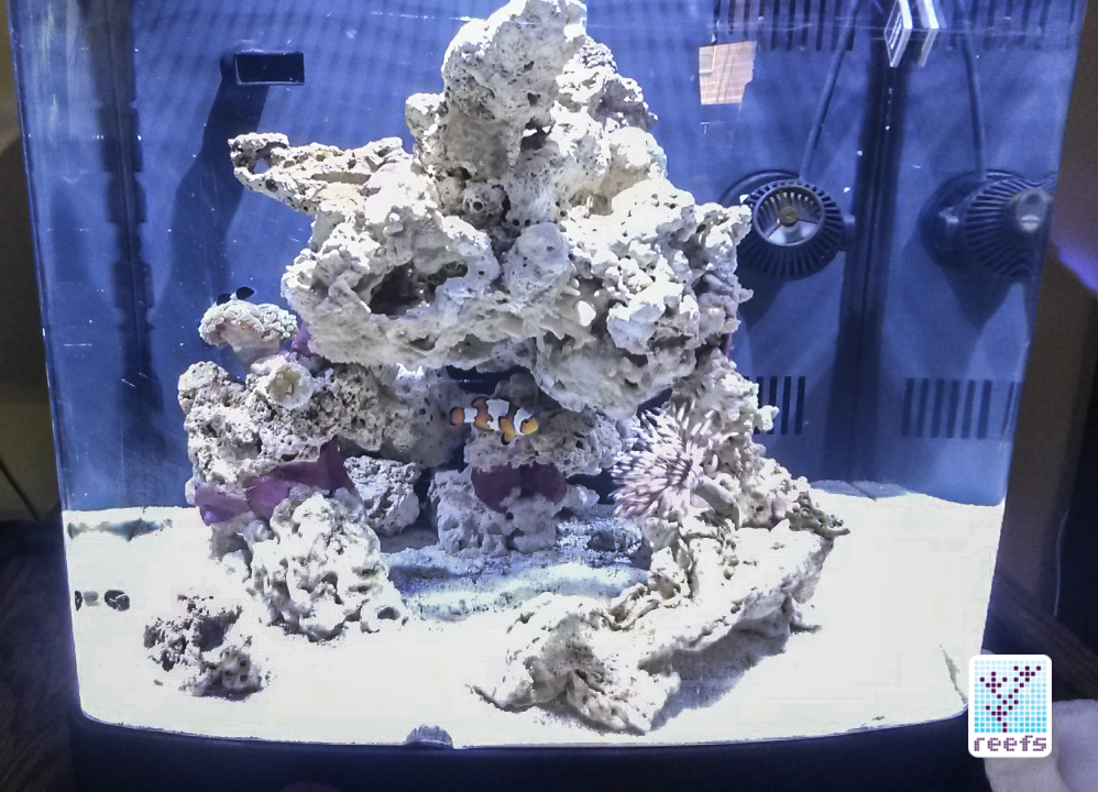 Back to reefing! Author's new, curb-found 14g all in one aquarium