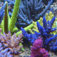 Image Korallen-Zucht.jpg