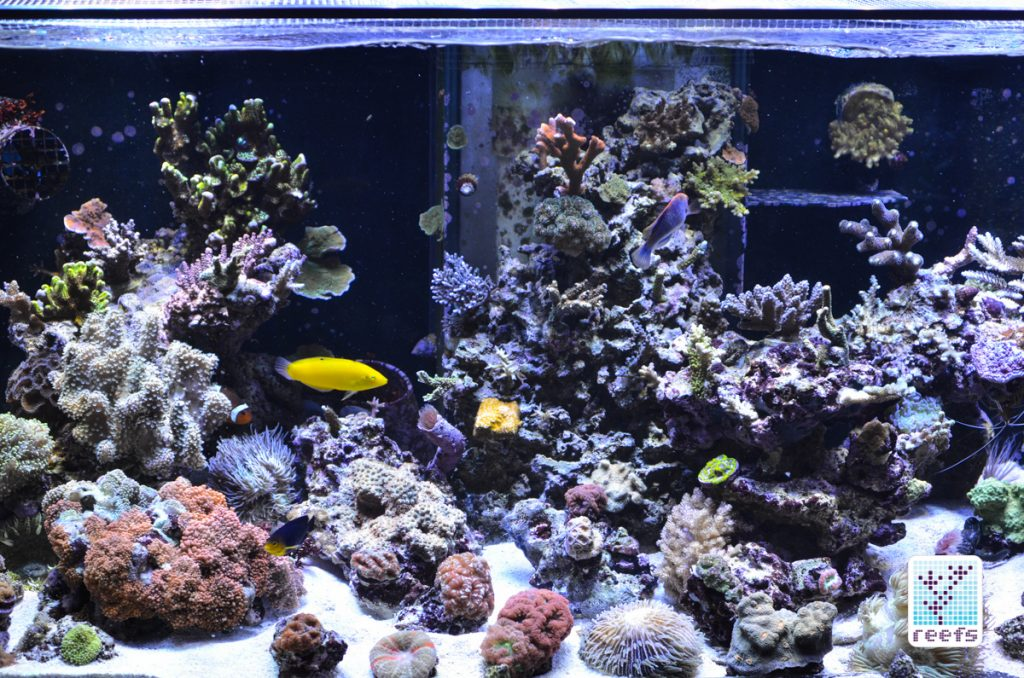 100g tank when things started going downhill