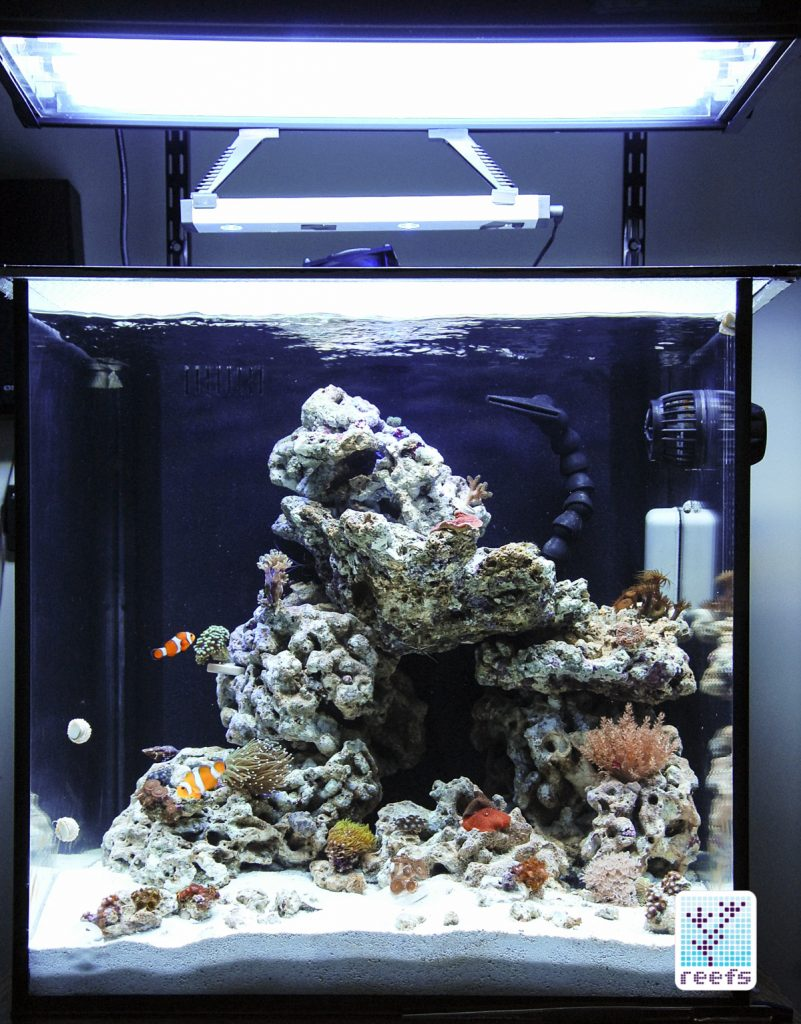 Original 34g cube tank few weeks in. First fish and corals enjoying the new reef