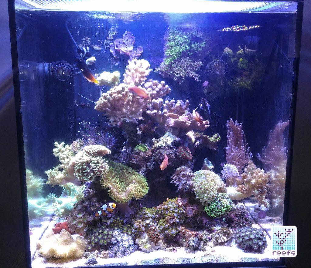 Author's current 34g aquarium