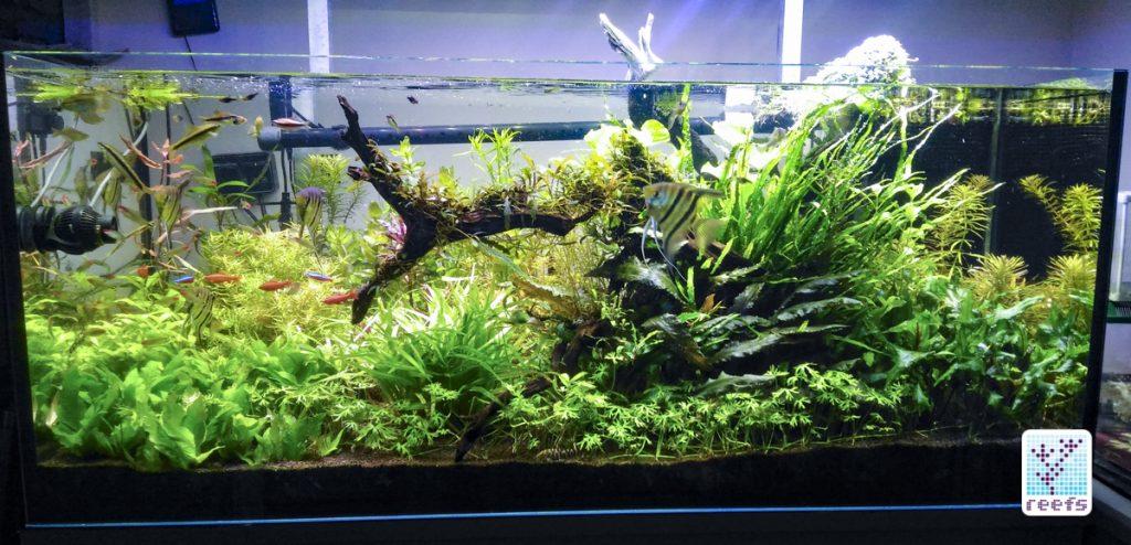 Author's 100g freshwater aquarium