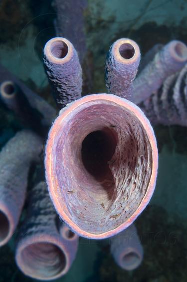 Sponge-Face - reefs