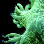 Let's talk Corals!  Elegance Coral