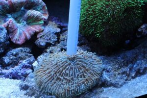 feedingcorals3-600x400