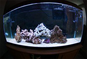 saltwater-aquairum-tank-cycle - reefs